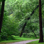 Sligo Creek Parkway near Maya's old Maryland home