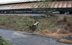 Animal waste flows into river from Thai pig farm - photo FAO