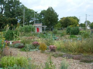 Alice's Garden: growing food and community in the central city. Photo: Margaret Swedish