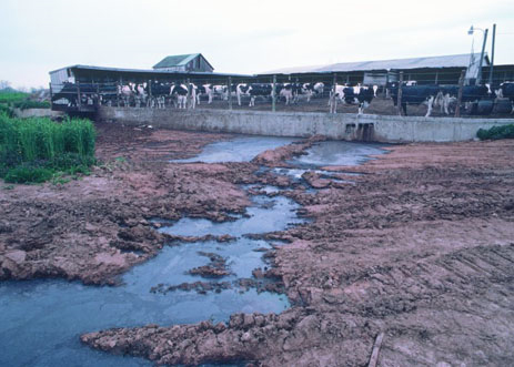 26 - factory-farm-runoff