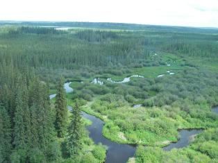 Athabasca River flowing through Alberta's boreal forest. Photo: Regional Aquatics Monitoring Program