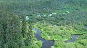 Athabasca River and boreal forest of Alberta, under threat from the tar sands industry.